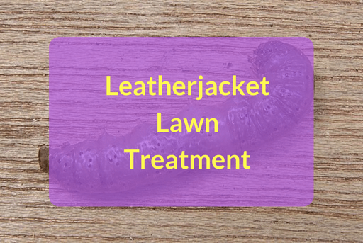 Leatherjacket Lawn Treatment
