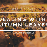 Dealing With Autumn Leaves in Your Lawn